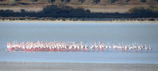 flamencos flamingo reserva natural naturaleza paisaje ruta wine tasting