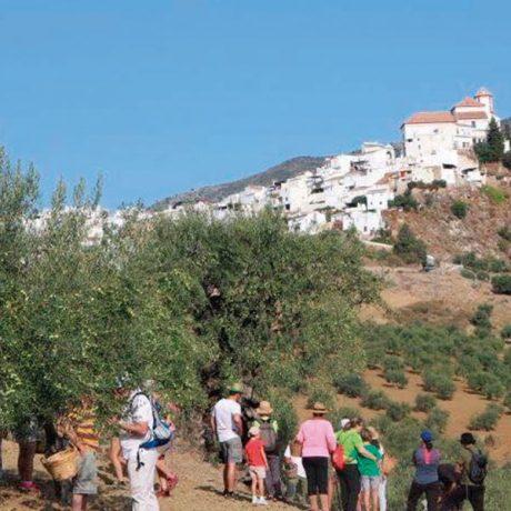 Cicerones-rurales-agroturismo-en-malaga-alozaina-olive-tour-detalle-pueblo