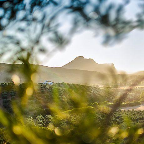 Cicerones-rurales-agroturismo-en-malaga-archidona-finca-semiaja-panoramica