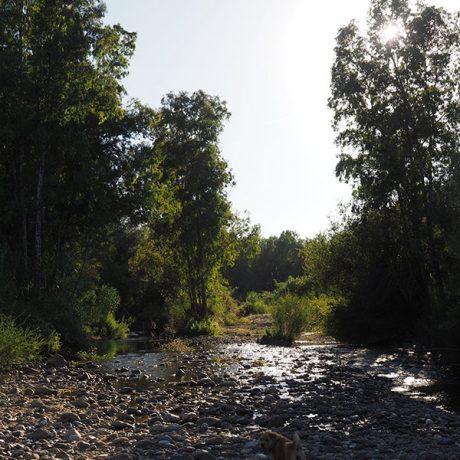 Cicerones-rurales-agroturismo-en-malaga-descubre-ecofinca-coin-rio-grande-detalle-rio