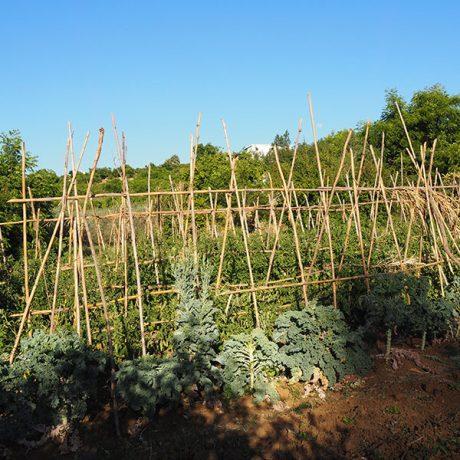 Cicerones-rurales-agroturismo-en-malaga-descubre-ecofinca-coin-rio-grande-huerda-ecologica