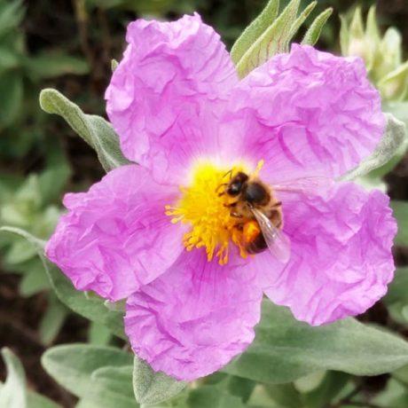 Cicerones-rurales-agroturismo-en-malaga-istan-una-dulce-manana-flor-abeja