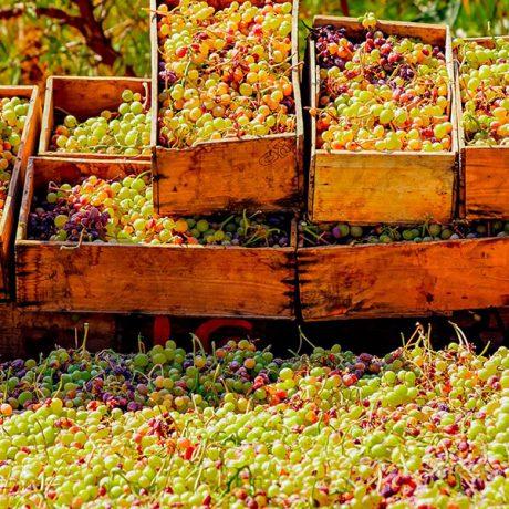 Cicerones-rurales-agroturismo-en-malaga-malaga-moscatel-El-Borge-cajas-uvas