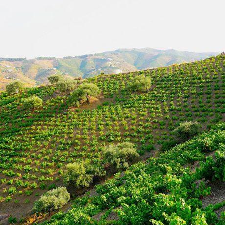 Cicerones-rurales-agroturismo-en-malaga-malaga-moscatel-El-Borge-finca-parras
