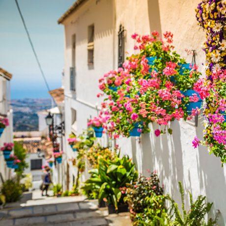 Cicerones-rurales-agroturismo-en-malaga-mijas-calle-con-macetas-flores