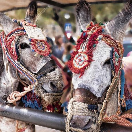 Cicerones-rurales-agroturismo-en-malaga-mijas-pueblo-burro-taxi
