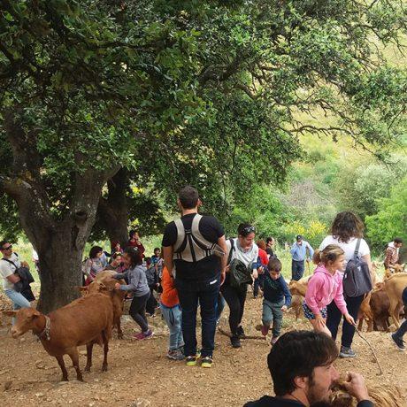 Cicerones-rurales-agroturismo-en-malaga-ruta-cabra-malaguena-casabermeja-cabras