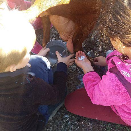 Cicerones-rurales-agroturismo-en-malaga-ruta-cabra-malaguena-casabermeja-ordenar-leche-de-cabra