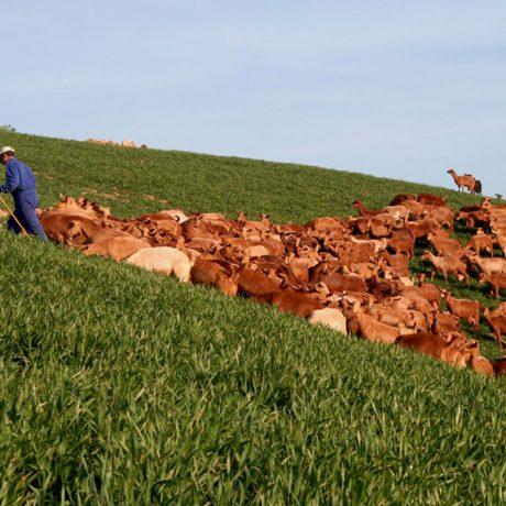 Cicerones-rurales-agroturismo-en-malaga-ruta-cabra-malaguena-casabermeja-pastor-rebano