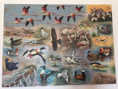 birdwatching aves especies protegidas fauna reserva natural