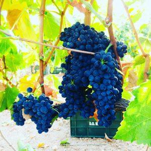 viña viñedo uva vino enoturismo enologia denominación de origen wine tasting