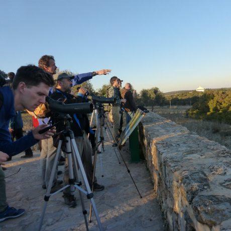Cicerones-Rurales-turismo-malaga-birdwatching- observacion de aves- reserva natural- naturaleza- ruta–vino -enoturismo -enologia -denominación de origen