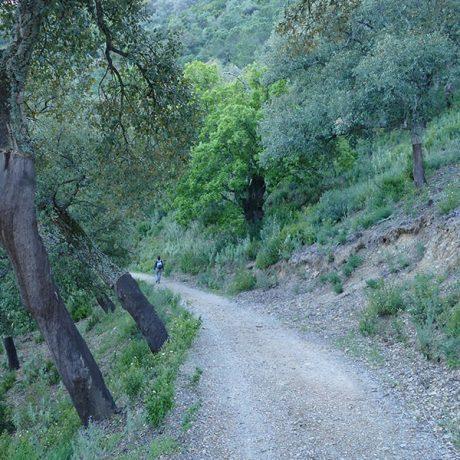 Cicerones-rurales-El-Bosque-dentro-y-fuera-1
