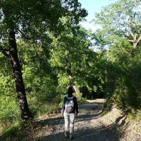 Cicerones-rurales-El-Bosque-dentro-y-fuera-6